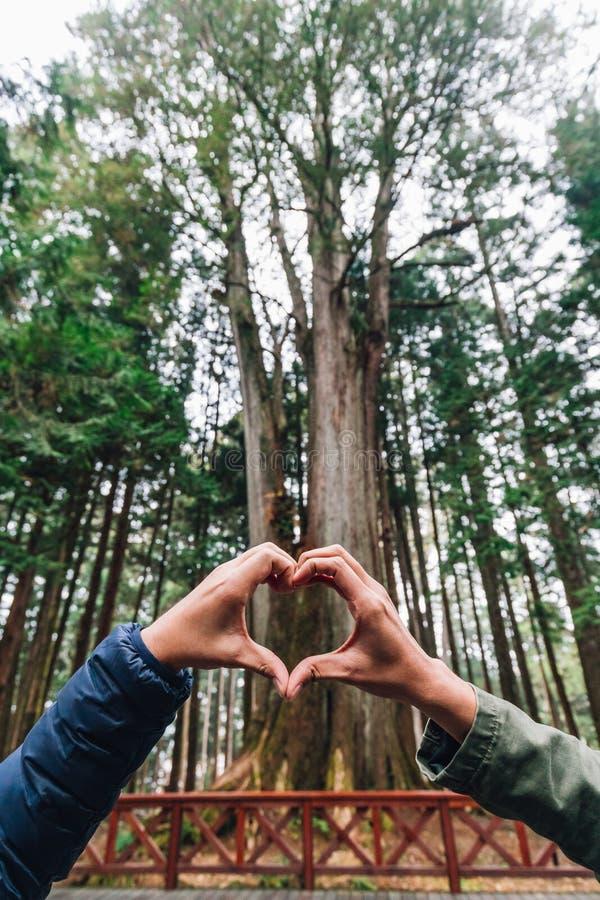 Hands Making Heart Shape voor het duizend jaar durende cypress in het Alishan National Forest Recreation Area in de winter in Chi royalty-vrije stock foto's