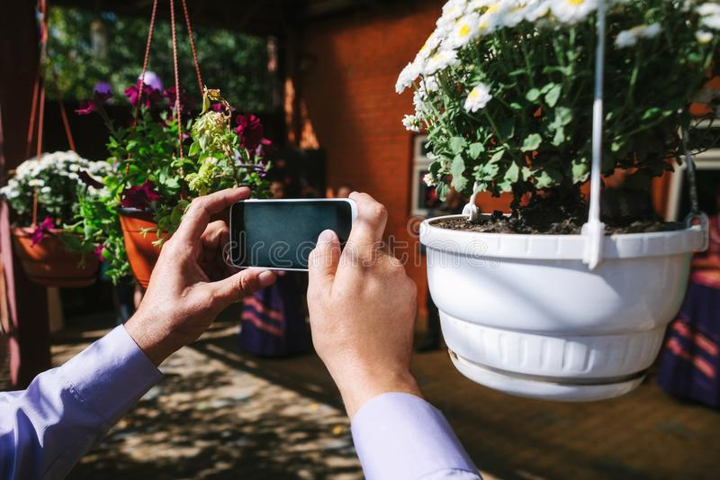 Hands of a man photographing. Flowers on a smartphone royalty free stock image