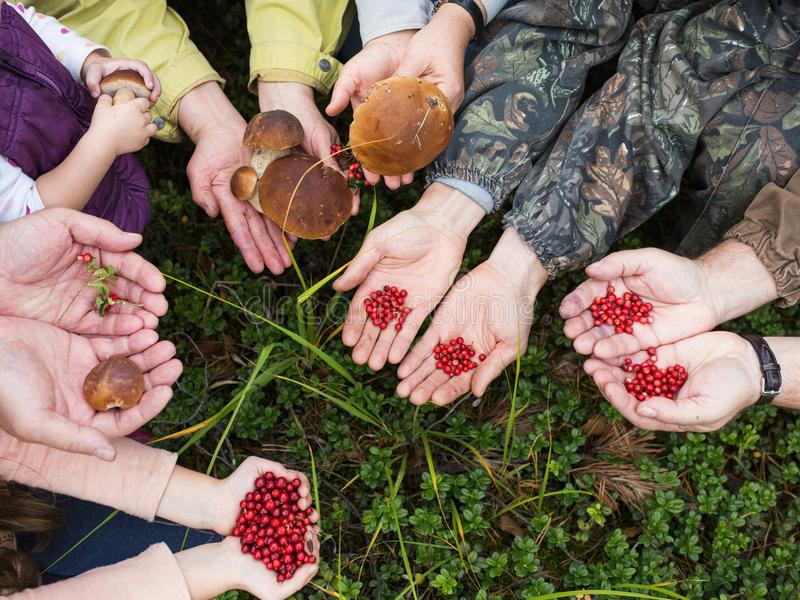 Hands of people stretch the gifts of the forest: mushrooms and berries. summer autumn harvest concept stock image