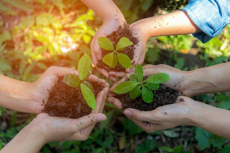 Hands People Team Work family Cupping young Plant Nurture Environmental and reduce global warming earth. stock photo