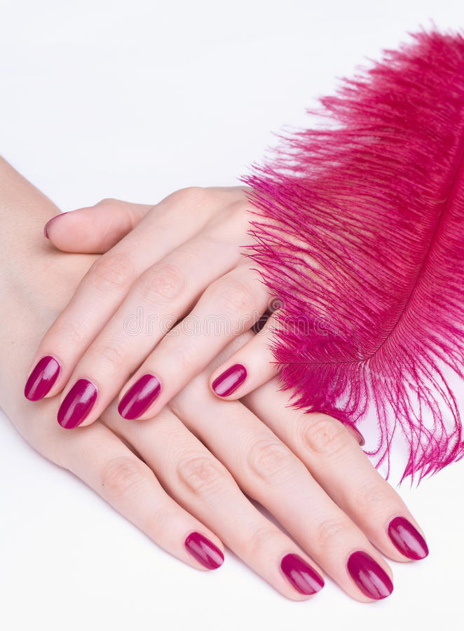 Download Hands With Pink Manicure And Feather Stock Image - Image: 15054373