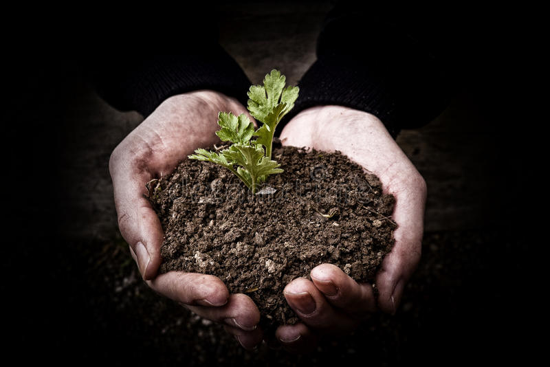 Hands holding plant royalty free stock photo