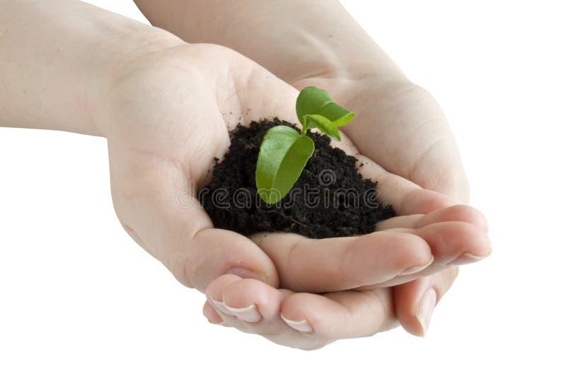 hands plantan arkivbild