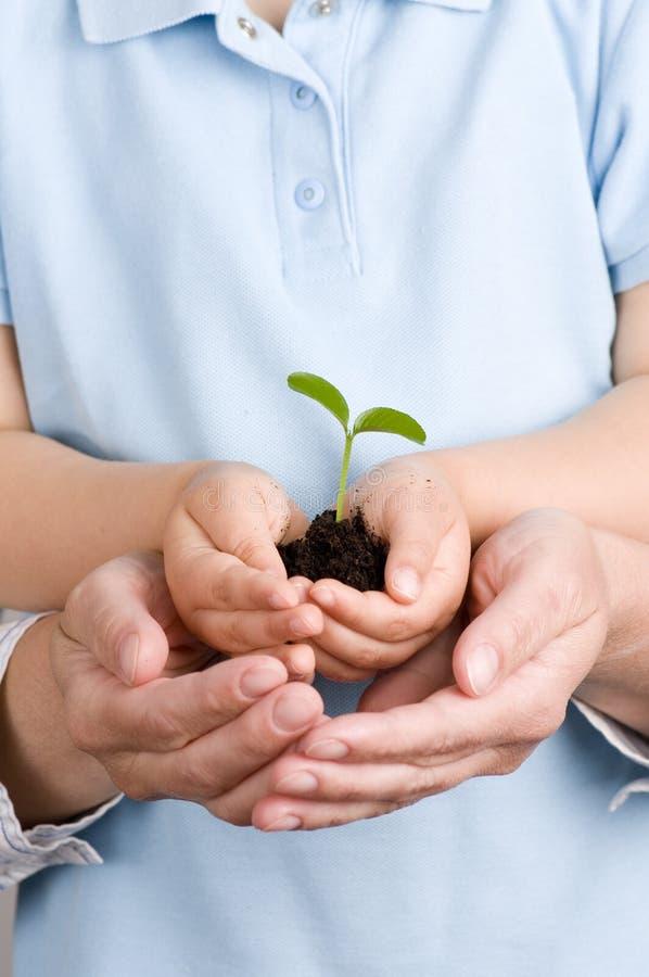 hands plantan arkivfoto