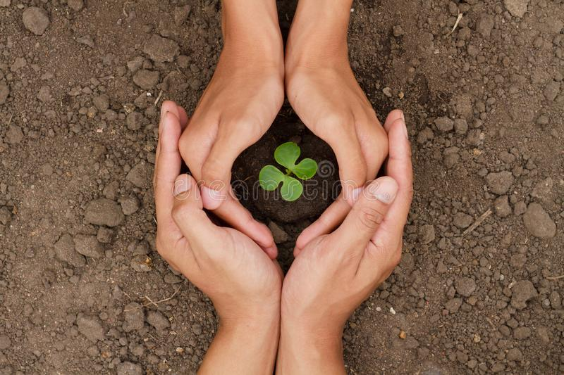 Hands are protect a small tree or plant grow on soil stock photo