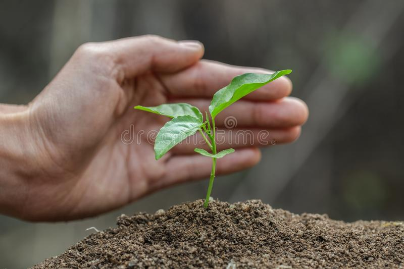 Hands protect trees, plant trees,  plant trees to reduce global warming, Forest conservation, World Environment Day.  stock photography