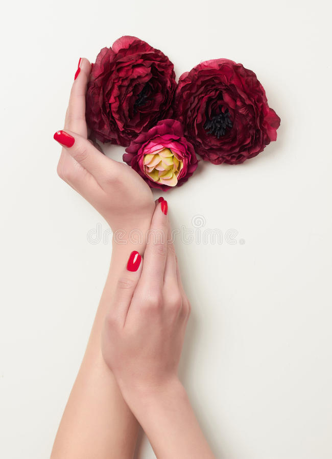 Hands with red manicure and red flowers royalty free stock photography