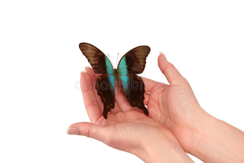 Hands releasing exotic butterfly royalty free stock image