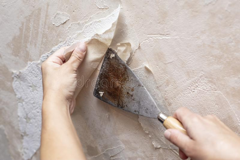 Hands remove old wallpaper from the wall with a spatula during repair in the room stock images