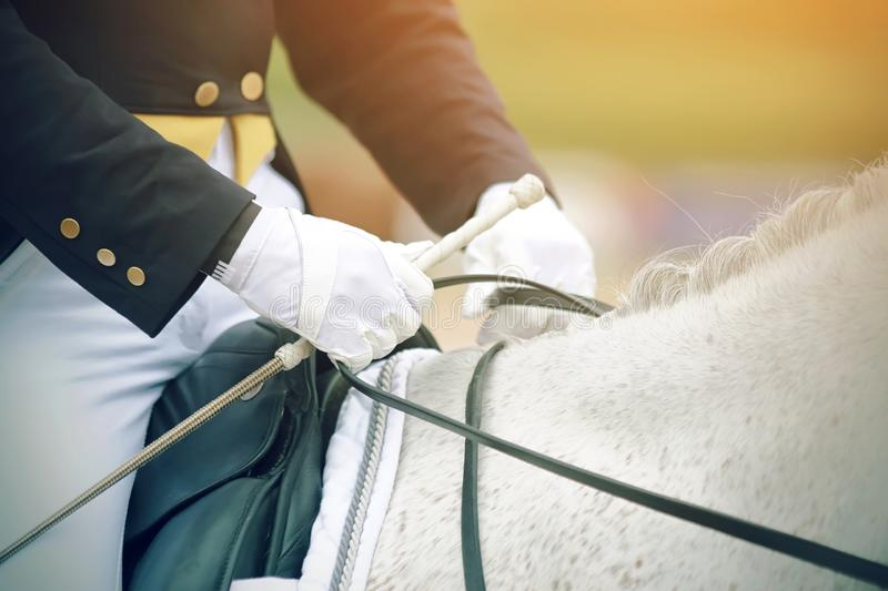 The hands of a rider who rides a white horse stock photos