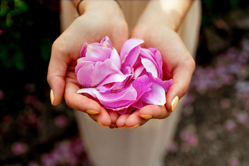 Hands with roses stock photography