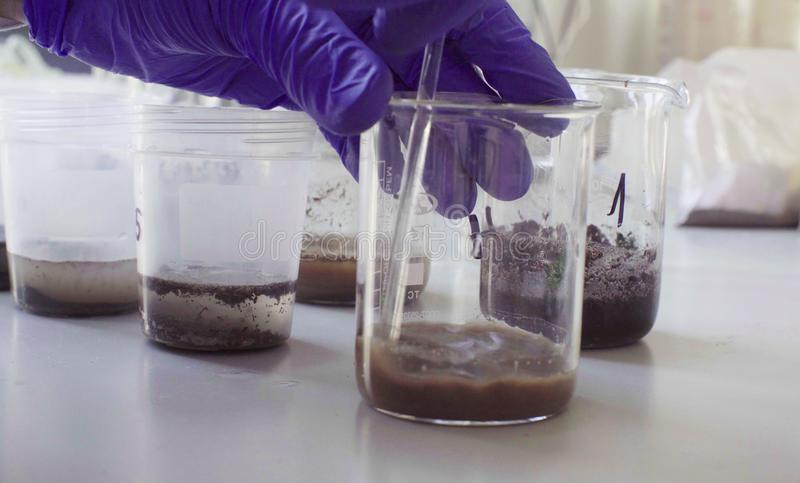Hands of the scientist mixing samples of the soil. Close up hands of the scientist in laboratory mixing samples of the soil with water in the chemical beakers royalty free stock image