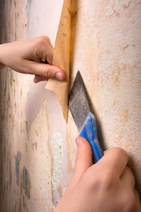 Download Hands Scraping Off Old Wallpaper With Spatula Stock Photo