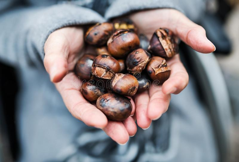 Hands of senior woman holding roasted chestnut outdoors in winter. stock photography