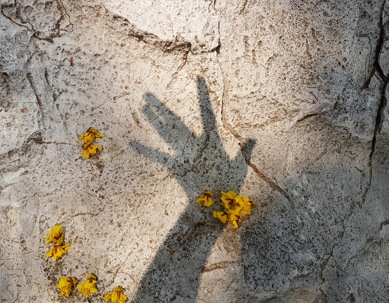 Hands shadow with yellow flowers on stone background stock photos