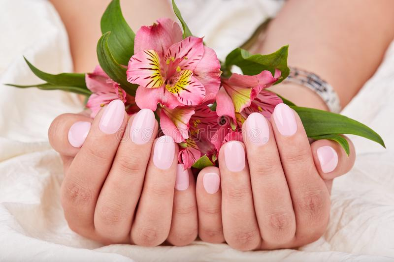 Hands with short manicured nails colored with pink nail polish. And lily flowers royalty free stock image