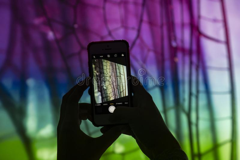 Hands with a smartphone taking picture of screen projection with macro picture of dragonfly wings. Female hands with a smartphone taking picture of screen royalty free stock image