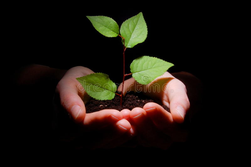 Hands soil and plant showing growth royalty free stock images