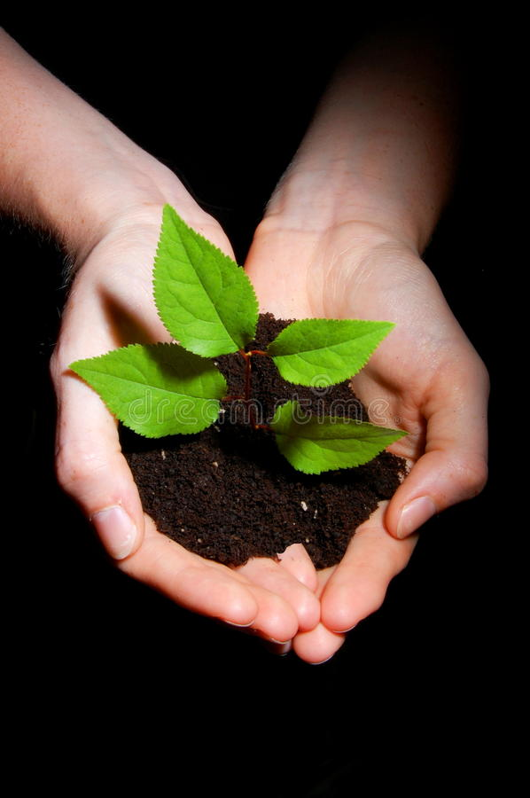 Download Hands Soil And Plant Showing Growth Stock Photo - Image: 9948652