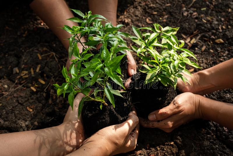 Hands Team work protecting sapling tree growing up and planting on land for reduce global warming earth, royalty free stock photography
