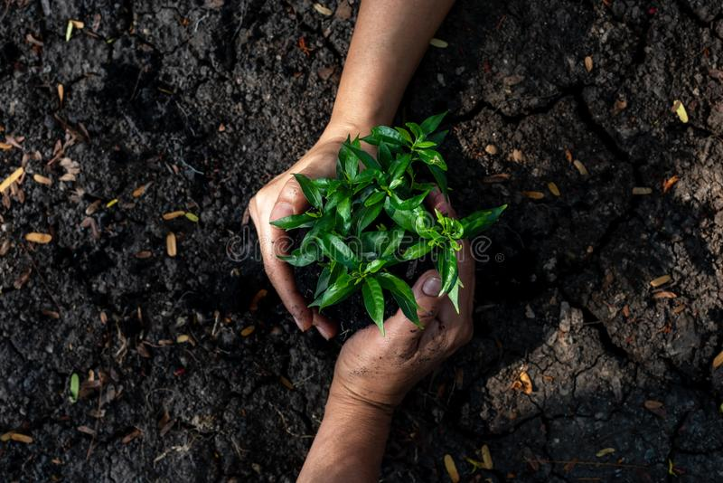 Hands Team work protecting tree growing up and planting on land for reduce global warming earth,. Top view. Agriculture Ecology Concept stock image