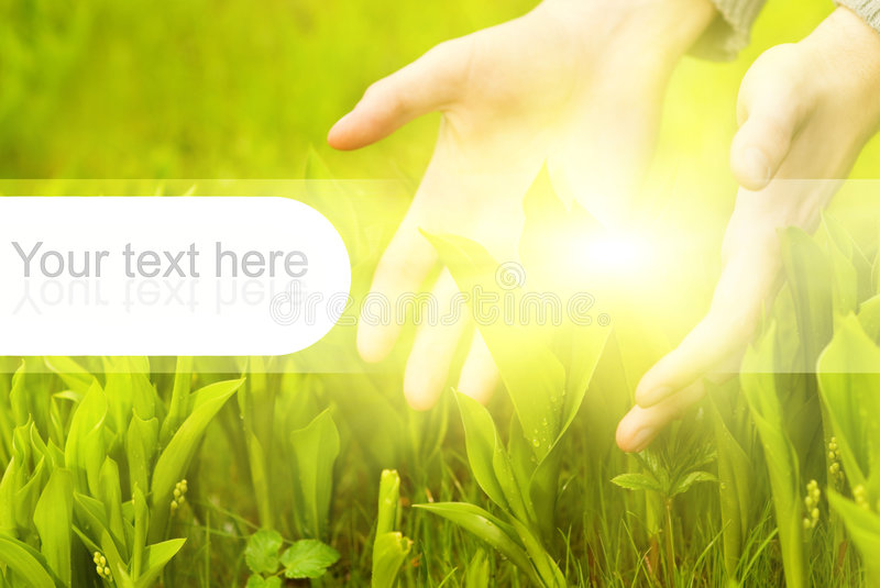 Hands touching green grass royalty free stock image
