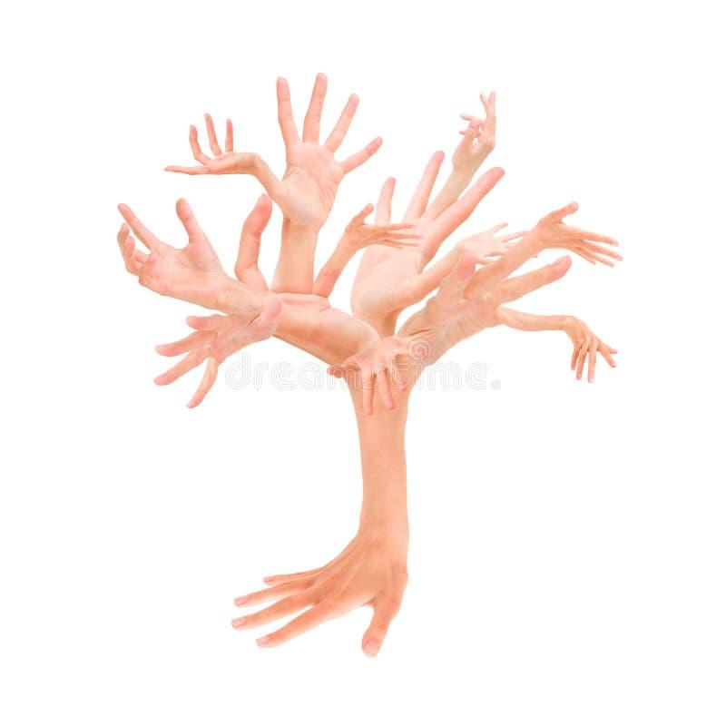 hands treen arkivfoto
