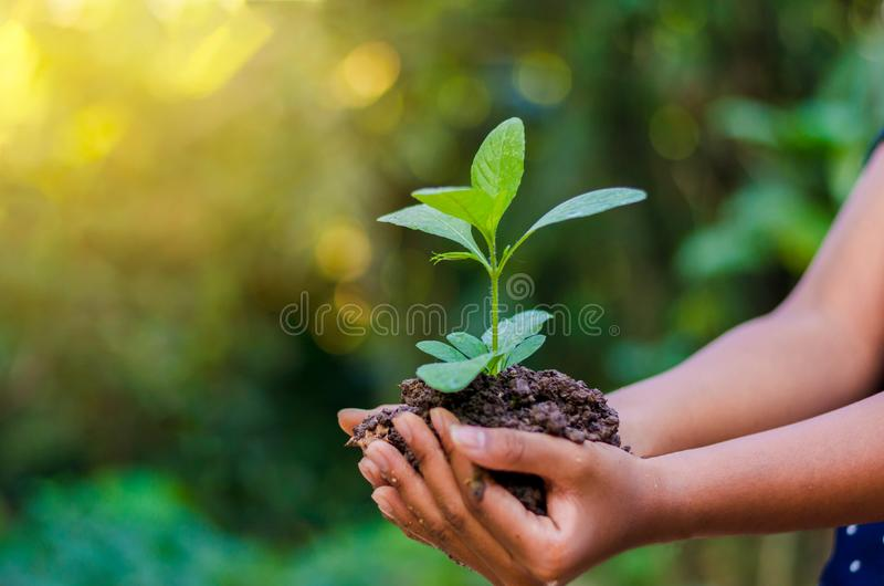 In the hands of trees growing seedlings. Bokeh green Background Female hand holding tree on nature field grass Forest conservation royalty free stock images
