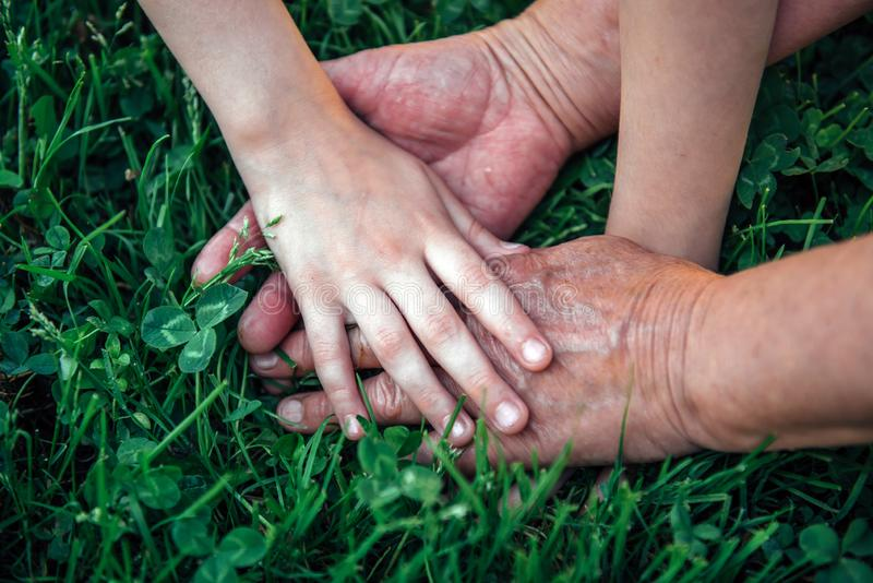 Hands unrecognizable grandmother and her granddaughter on green grass. Hands of elderly woman and young girl, close-up stock images