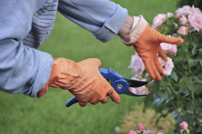 Hands wearing gloves while working at garden. Hands wearing orange gloves while working at garden in spring stock images