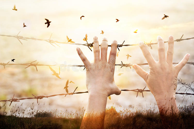 Hands of wire prison with bird flying on sunset sky background stock photos