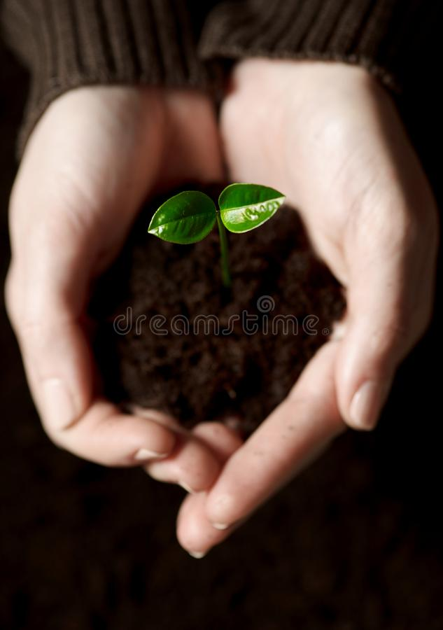 Free Hands With A Little Green Plant Royalty Free Stock Photography - 30403577