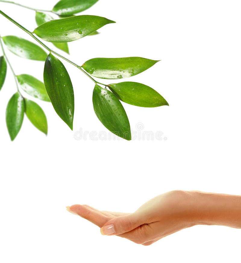 Free Hands With Leaf 4 Royalty Free Stock Images - 16147909