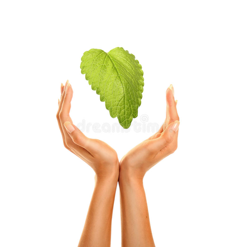 Free Hands With Leaf 4 Royalty Free Stock Images - 16147919