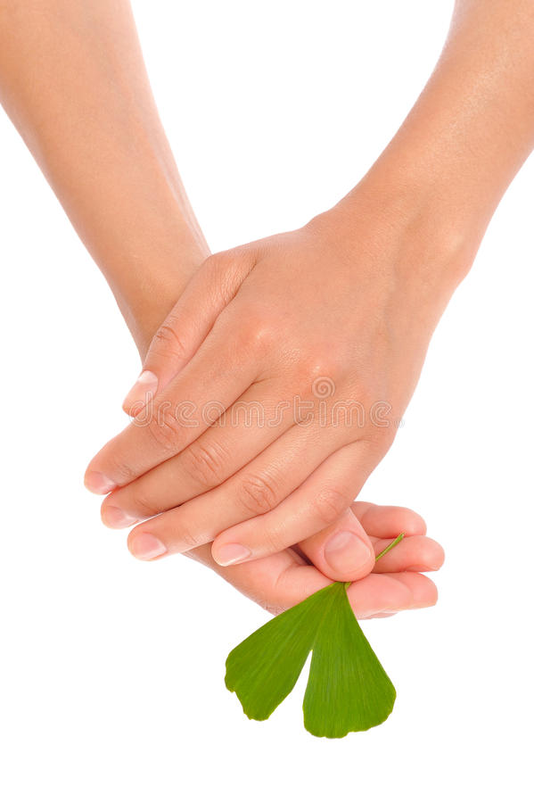 Hands Of Young Woman Holding Ginkgo Leaf Royalty Free Stock Photo