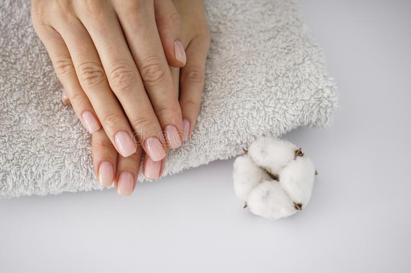 Hands of a young woman, on a white towel, white cotton flower on a white background. Female manicure. Cotton flower royalty free stock image