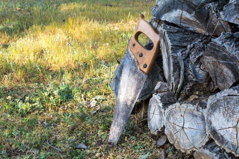Handsaw velho que descansa em uma pilha da madeira serrada de madeira na floresta imagem de stock