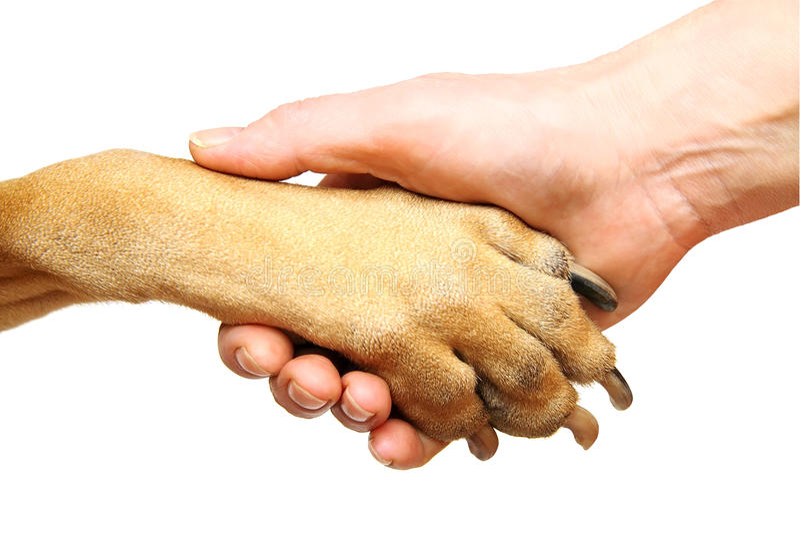 Download Handshake stock photo. Image of finger, background, white - 23494440