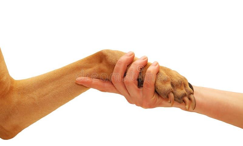 Download Handshake stock image. Image of team, humane, claw, mammal - 23494443