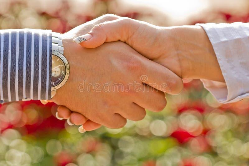 Download Handshake stock image. Image of meeting, greeting, partner - 27413793