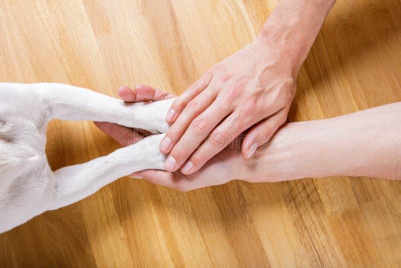 Handshake del proprietario e del cane fotografia stock