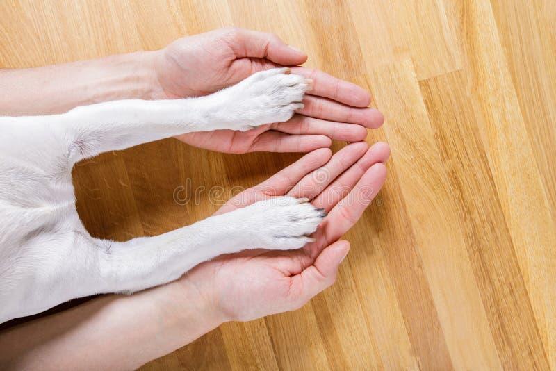 Handshake del proprietario e del cane immagini stock