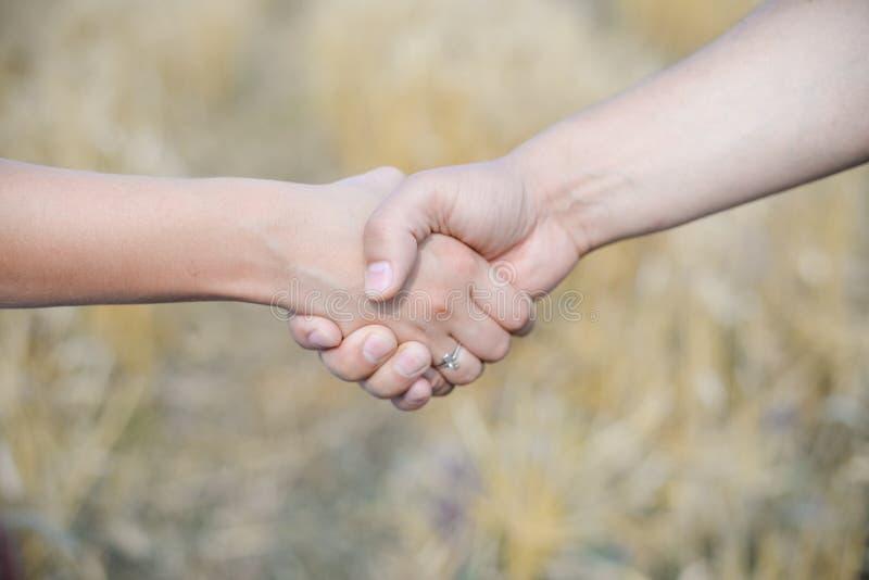 Handskakning på skörden på bakgrund för vetefält royaltyfria foton