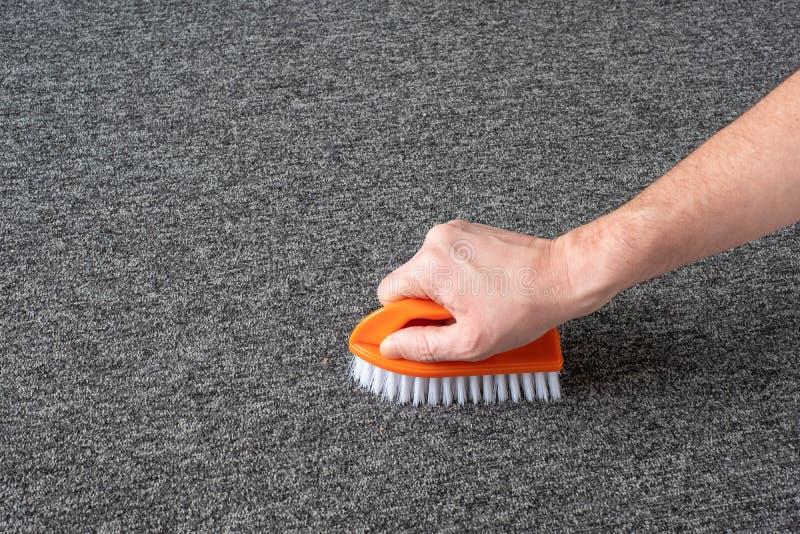 Handskar utan handskar som rengör grå mattan med borste kemtvätt arkivbilder