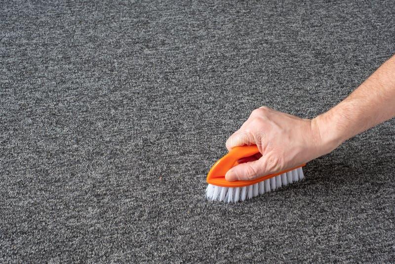 Handskar utan handskar som rengör grå mattan med borste kemtvätt arkivbild