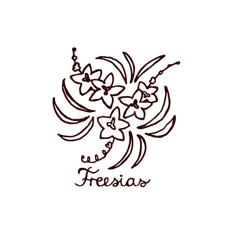 Handsketchedboeket van fresia's vector illustratie