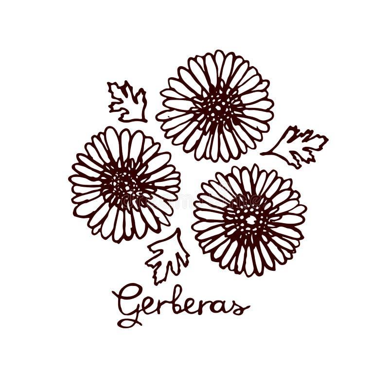 Handsketchedboeket van gerberas vector illustratie