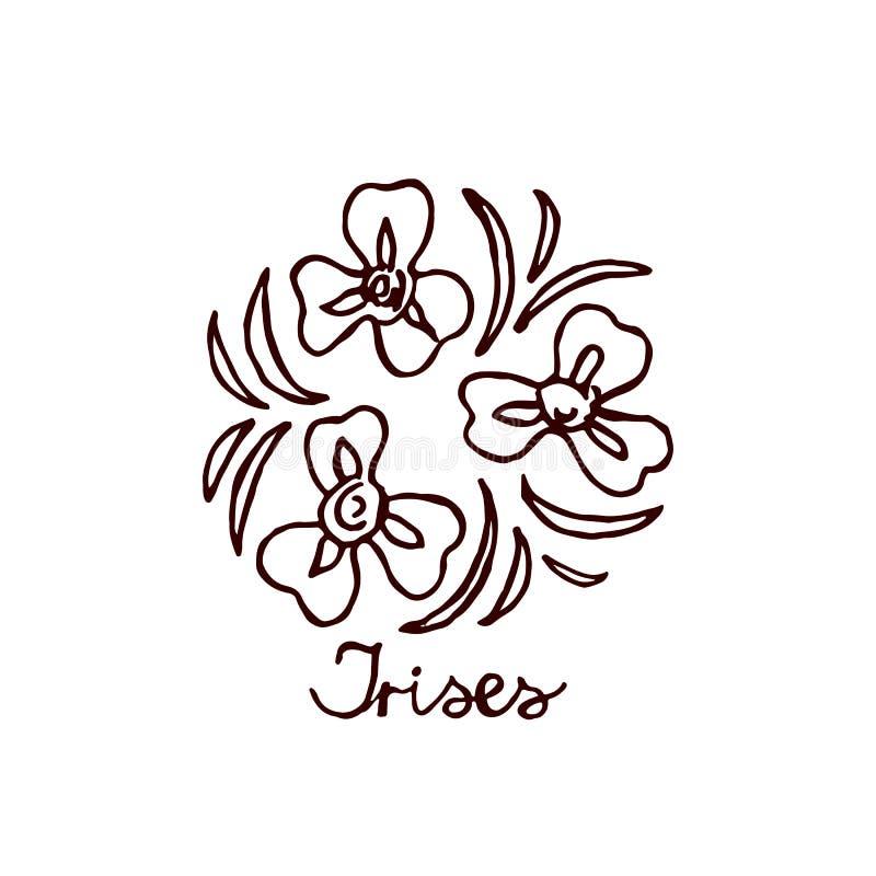 Handsketchedboeket van irissen stock illustratie