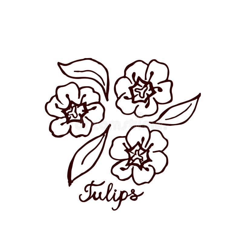 Handsketchedboeket van tulpen vector illustratie