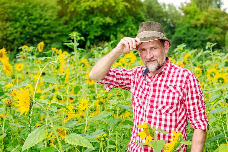 Handsome bavarian man in his 50s standing in a field of sunflowers royalty free stock photo